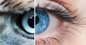 Nekünk fontos az Ön látása !